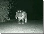 Кот-клептоман станет почетным гостем парада домашних животных
