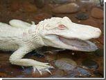 Немец открыл агентство по трудоустройству животных-альбиносов