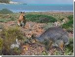 На Менорке обнаружили останки гигантских кроликов