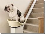 Толстых псов научат подниматься по лестницам в механической корзине