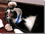 Кошка обесточила квартиру эстонца