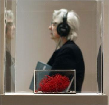 Выставка: мозг Эйнштейна оказался меньше мозга маньяка