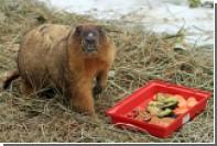 В Московском зоопарке проснулись сурки