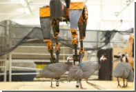 В США создали самого быстрого в мире двуногого робота