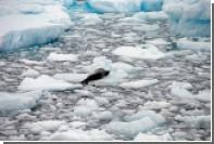 Ученые сообщили об угрожающей скорости таяния шельфовых ледников Антарктиды