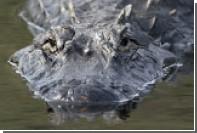 В крови крокодилов нашли мощные антимикробные средства