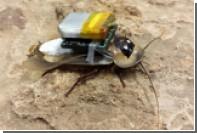 Тараканами-киборгами научились управлять дистанционно