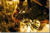 Злоупотребление марихуаной связали с нарушениями долговременной памяти