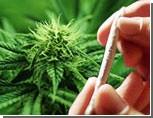 В Крымских школах марихуану продают килограммами