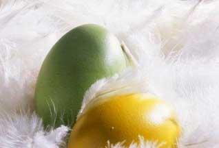 На ферме в Австрии курицы несут зеленые яйца