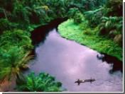 Конго обменяло миллионы гектаров леса на соль и сахар