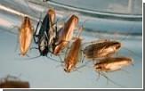 Тараканов будут замораживать