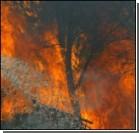 На Львовщине горят леса