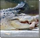 """Крокодил """"отблагодарил"""" своего опекуна"""