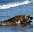 Тюленям не повезло с погодой