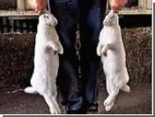 Кроликовод прекратил сотрудничество с КНДР: Ким Чен Ир съел его производителей
