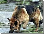 Кладбища Москвы от сатанистов охраняют специально обученные собаки