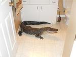 Жительница Флориды нашла в спальне аллигатора