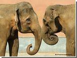 Москва подарит Валенсии двух слоних