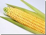 Лук и кукуруза поборются за звание главного овоща Нью-Йорка