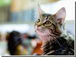 Калифорнийский пенсионер ударил соседа ножом из-за котят