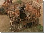 Китайские защитники животных спасли сотни собак от поедания
