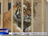 Жительнице Екатеринбурга разрешили оставить у себя амурского тигра