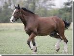 Конь задержал своего похитителя