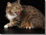 Кошка похитила у своей хозяйки ювелирные украшения
