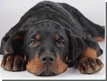 Защитники животных пообещали подарить сознательному собаководу стерилизацию