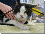 Американские ветеринары спасли кота со стрелой в голове