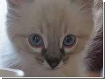 Екатеринбургский кот подался в политику