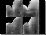Рацион рыб впервые определили по текстуре зубов