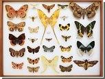 Новый проект поставил цель открыть 10 миллионов новых видов за 50 лет