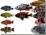 Сохранение видового разнообразия возложили на разборчивых самок