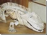 Узор на костях древних амфибий оказался приспособлением к дыханию