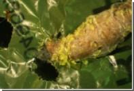 Обнаружены пожирающие пластик гусеницы