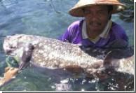 Индонезийский рыбак поймал редчайшую древнюю рыбу