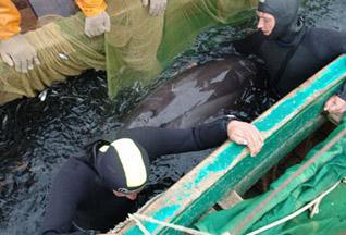 В Балаклаве спасли дельфина