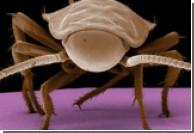 У вас есть тараканы? Продайте их ученым