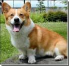 Собаку принесли в жертву королевской семье