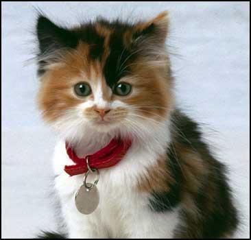 Кошка вылечит от аллергии