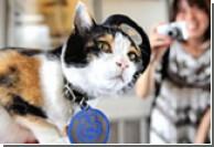 Кошка увеличила доходы железной дороги в Японии