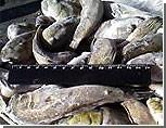 В Виннице изъяли 20 тонн рыбы сомнительного качества