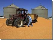 Египет наложил арест на привезенную из России пшеницу