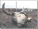На Урале найден опасный бесхозный скотомогильник