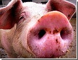 """Украина может отменить запрет на ввоз мяса из США - """"свиной грипп"""" от него не грозит"""