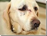 Пес и его хозяин выжили после падения с 60-метровой высоты