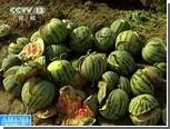 На китайских полях начали взрываться арбузы