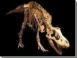 В пустыне Гоби нашли детенышей тарбозавров